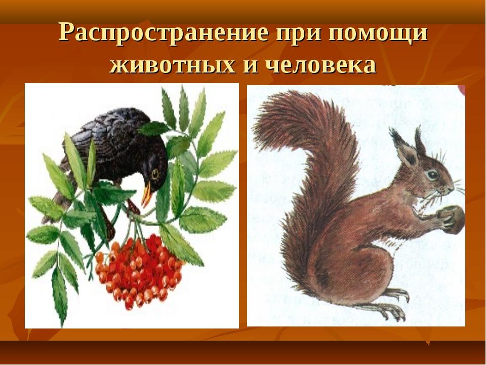 Распространение при помощи животных и человека