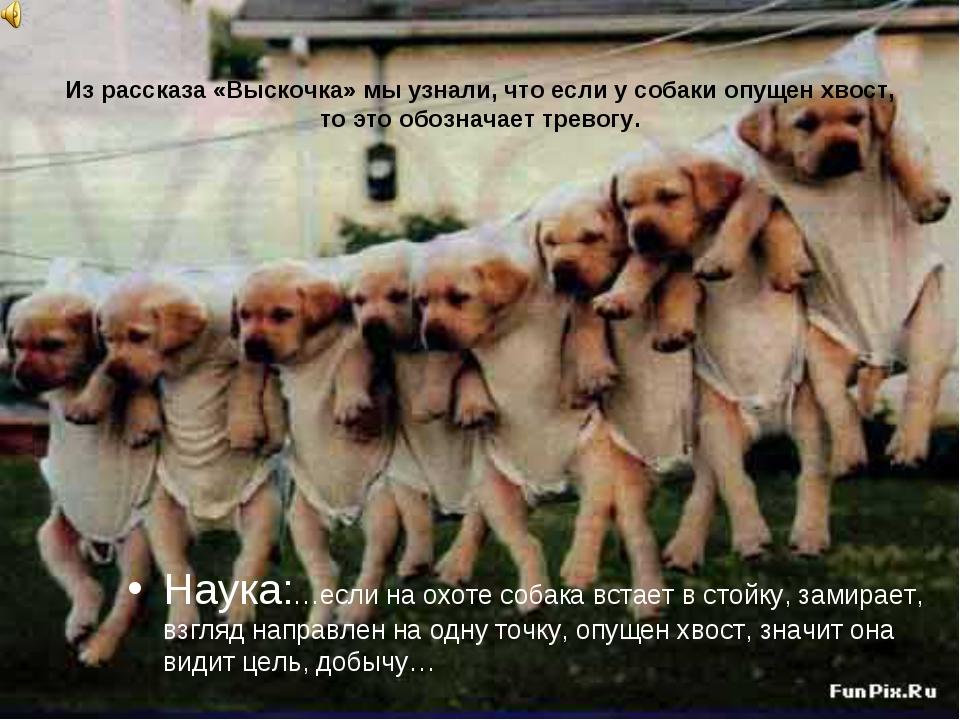 Из рассказа «Выскочка» мы узнали, что если у собаки опущен хвост, то это обоз...