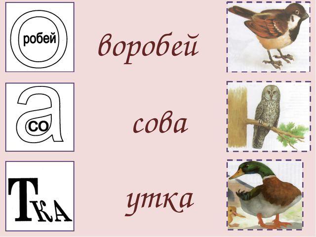 воробей сова утка