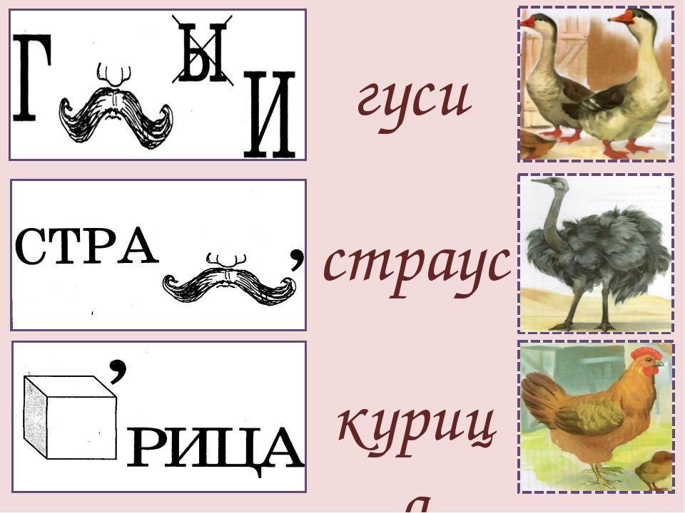 гуси страус курица
