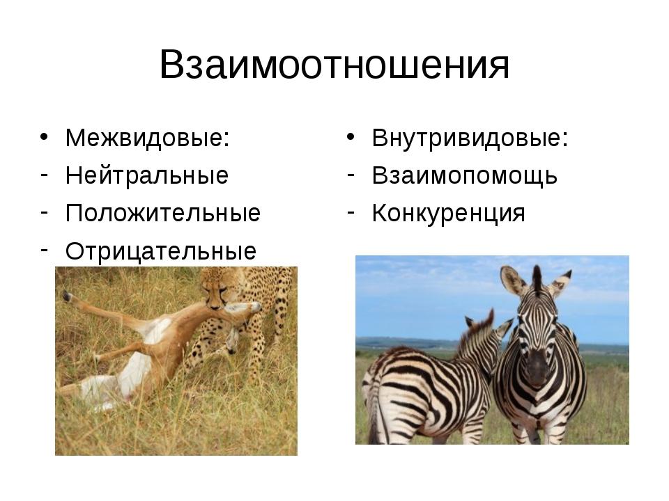 Взаимоотношения Межвидовые: Нейтральные Положительные Отрицательные Внутривид...