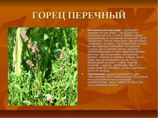 ГОРЕЦ ПЕРЕЧНЫЙ Ботаническое описание: однолетнее травянистое растение, с остр