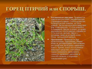 ГОРЕЦ ПТИЧИЙ или СПОРЫШ. Ботаническое описание: Травянистое однолетнее растен