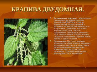 КРАПИВА ДВУДОМНАЯ. Ботаническое описание : Многолетнее травянистое двудомное