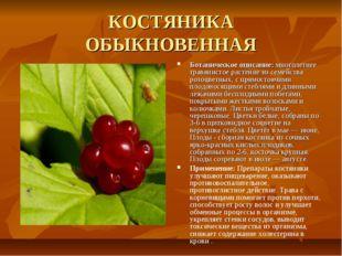 КОСТЯНИКА ОБЫКНОВЕННАЯ Ботаническое описание: многолетнее травянистое растени