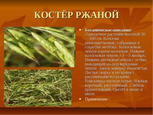 КОСТЁР РЖАНОЙ Ботаническое описание: Однолетнее растение высотой 30—100 см. К