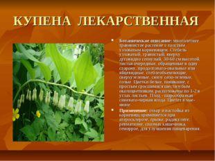 КУПЕНА ЛЕКАРСТВЕННАЯ Ботаническое описание: многолетнее травянистое растение