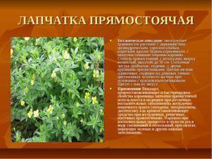 ЛАПЧАТКА ПРЯМОСТОЯЧАЯ Ботаническое описание: многолетнее травянистое растение