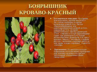 БОЯРЫШНИК КРОВАВО-КРАСНЫЙ Ботаническое описание: Кустарник или небольшое дере
