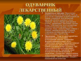 ОДУВАНЧИК ЛЕКАРСТВЕННЫЙ Ботаническое описание: Многолетнее травянистое растен