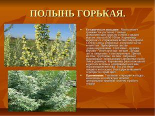ПОЛЫНЬ ГОРЬКАЯ. Ботаническое описание: Многолетнее травянистое растение с сил