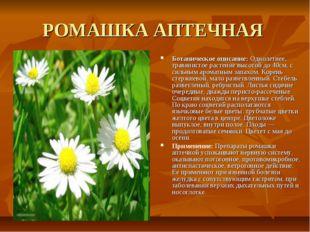 РОМАШКА АПТЕЧНАЯ Ботаническое описание: Однолетнее, травянистое растение высо