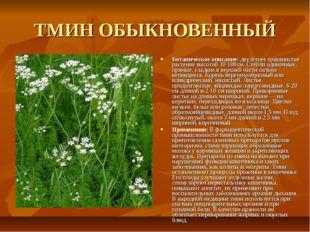 ТМИН ОБЫКНОВЕННЫЙ Ботаническое описание: двулетнее травянистое растение высот