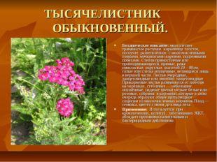 ТЫСЯЧЕЛИСТНИК ОБЫКНОВЕННЫЙ. Ботаническое описание: многолетнее травянистое р