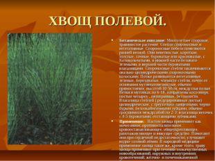 ХВОЩ ПОЛЕВОЙ. Ботаническое описание: Многолетнее споровое, травянистое растен