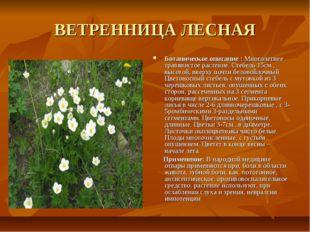 ВЕТРЕННИЦА ЛЕСНАЯ Ботаническое описание : Многолетнее травянистое растение. С
