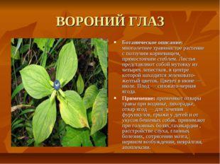 ВОРОНИЙ ГЛАЗ Ботаническое описание: многолетнее травянистое растение с ползуч