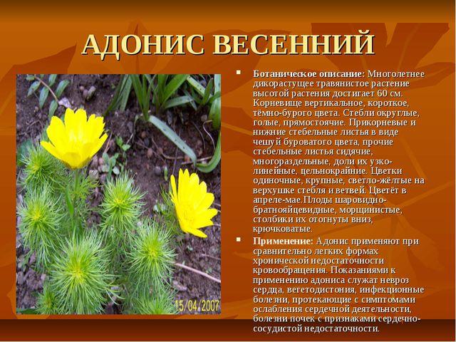 АДОНИС ВЕСЕННИЙ Ботаническое описание: Многолетнее дикорастущее травянистое р...