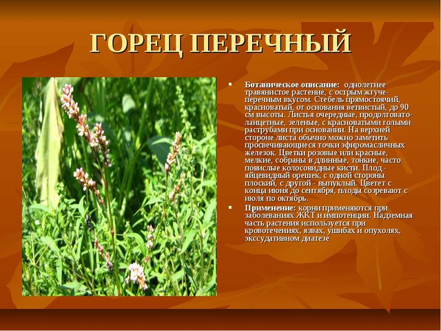 ГОРЕЦ ПЕРЕЧНЫЙ Ботаническое описание: однолетнее травянистое растение, с остр...