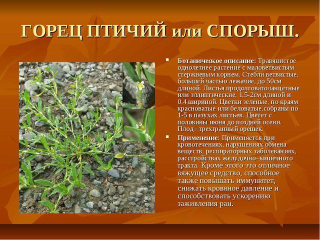 ГОРЕЦ ПТИЧИЙ или СПОРЫШ. Ботаническое описание: Травянистое однолетнее растен...