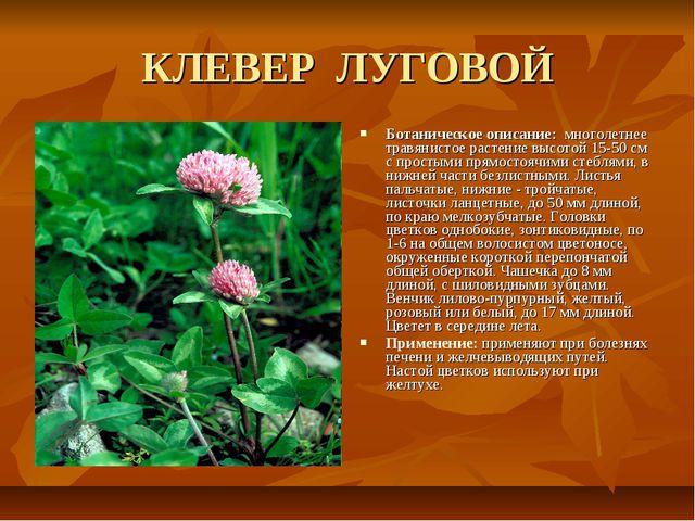 КЛЕВЕР ЛУГОВОЙ Ботаническое описание: многолетнее травянистое растение высото...