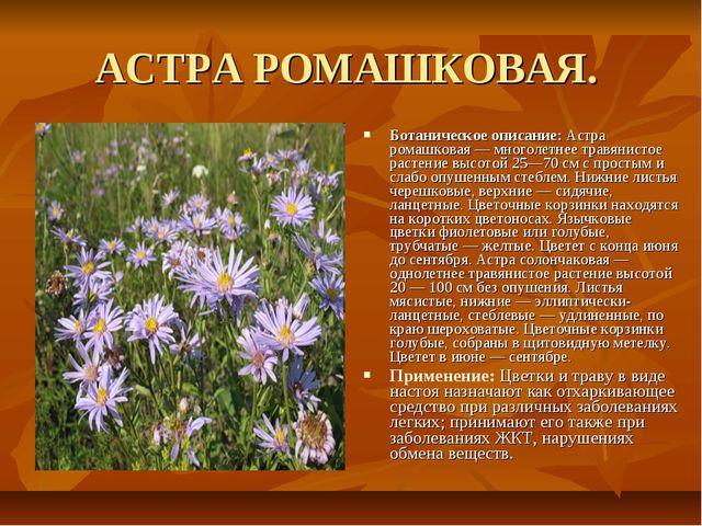 АСТРА РОМАШКОВАЯ. Ботаническое описание: Астра ромашковая — многолетнее травя...