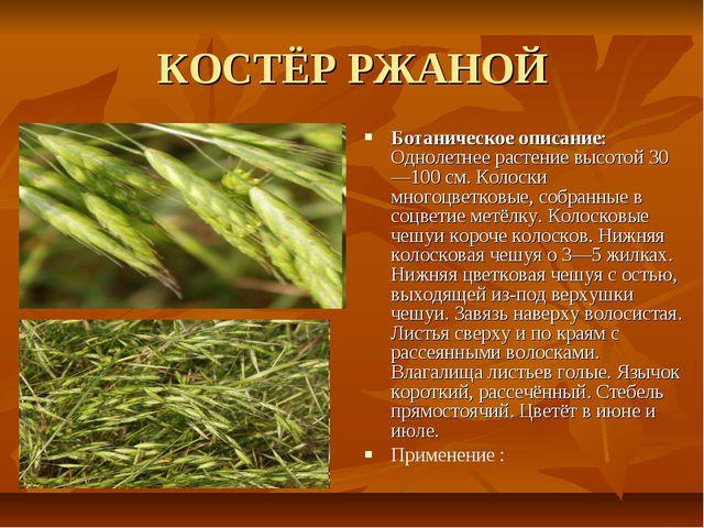КОСТЁР РЖАНОЙ Ботаническое описание: Однолетнее растение высотой 30—100 см. К...