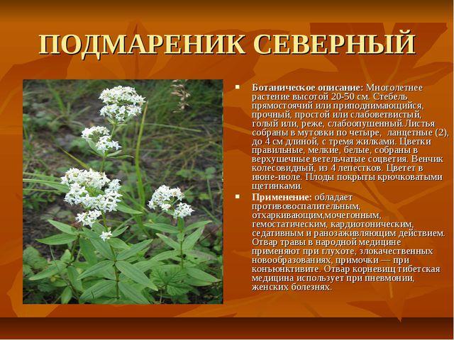 ПОДМАРЕНИК СЕВЕРНЫЙ Ботаническое описание: Многолетнее растение высотой 20-50...