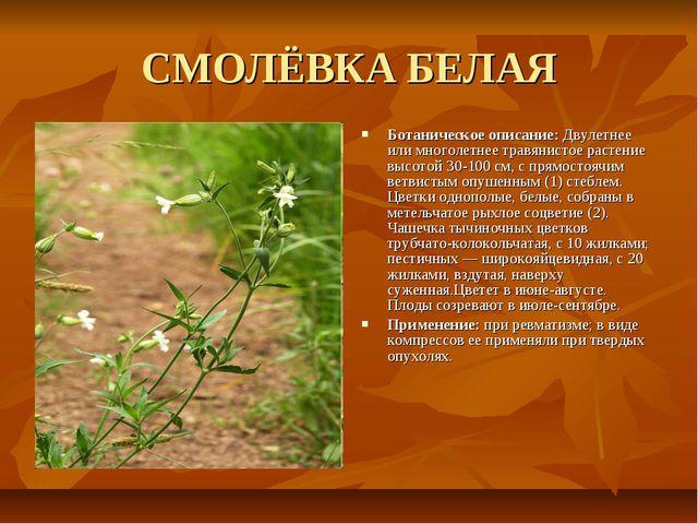 СМОЛЁВКА БЕЛАЯ Ботаническое описание: Двулетнее или многолетнее травянистое р...
