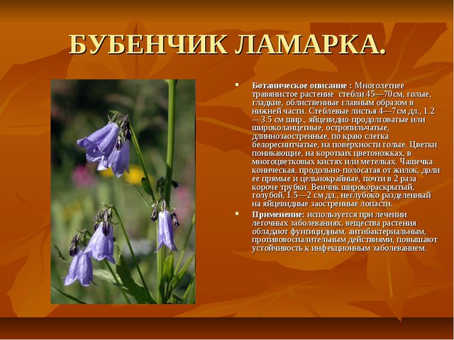 БУБЕНЧИК ЛАМАРКА. Ботаническое описание : Многолетнее травянистое растение ст...