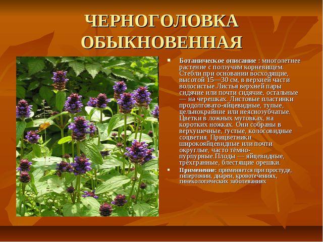 ЧЕРНОГОЛОВКА ОБЫКНОВЕННАЯ Ботаническое описание : многолетнее растение с полз...
