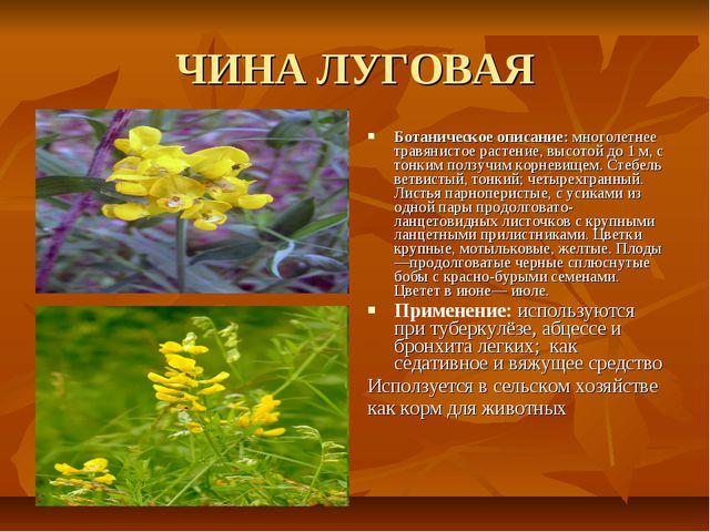 ЧИНА ЛУГОВАЯ Ботаническое описание: многолетнее травянистое растение, высотой...