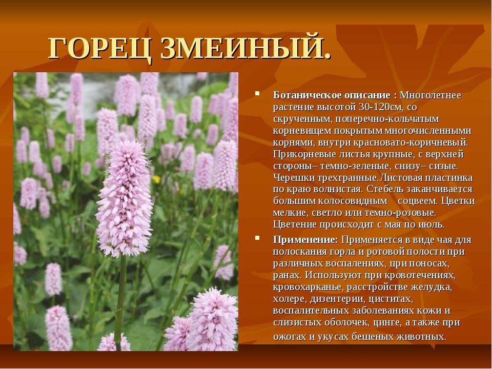 ГОРЕЦ ЗМЕИНЫЙ. Ботаническое описание : Многолетнее растение высотой 30-120см,...