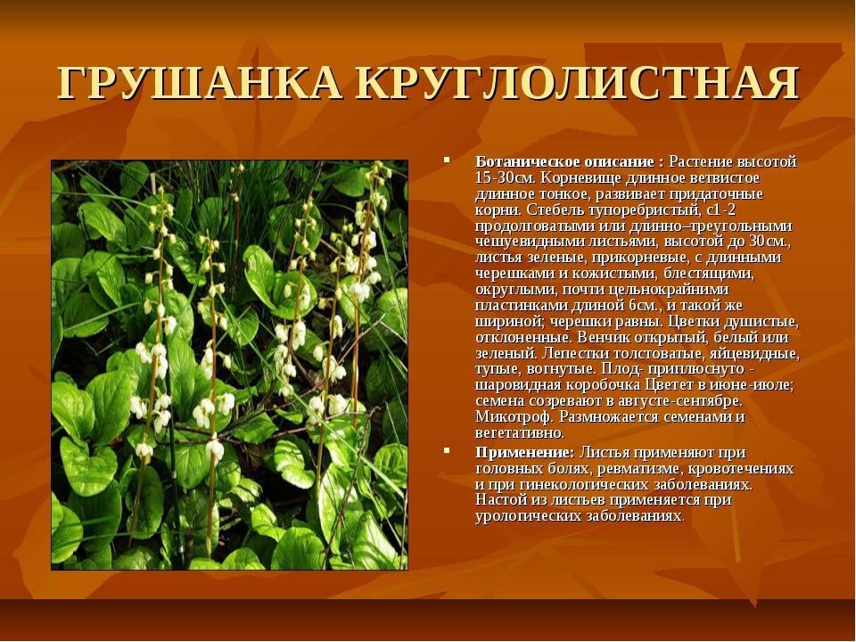 ГРУШАНКА КРУГЛОЛИСТНАЯ Ботаническое описание : Растение высотой 15-30см. Корн...