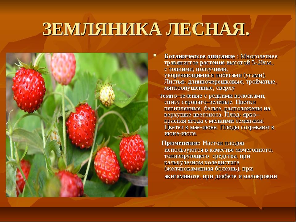ЗЕМЛЯНИКА ЛЕСНАЯ. Ботаническое описание : Многолетнее травянистое растение вы...