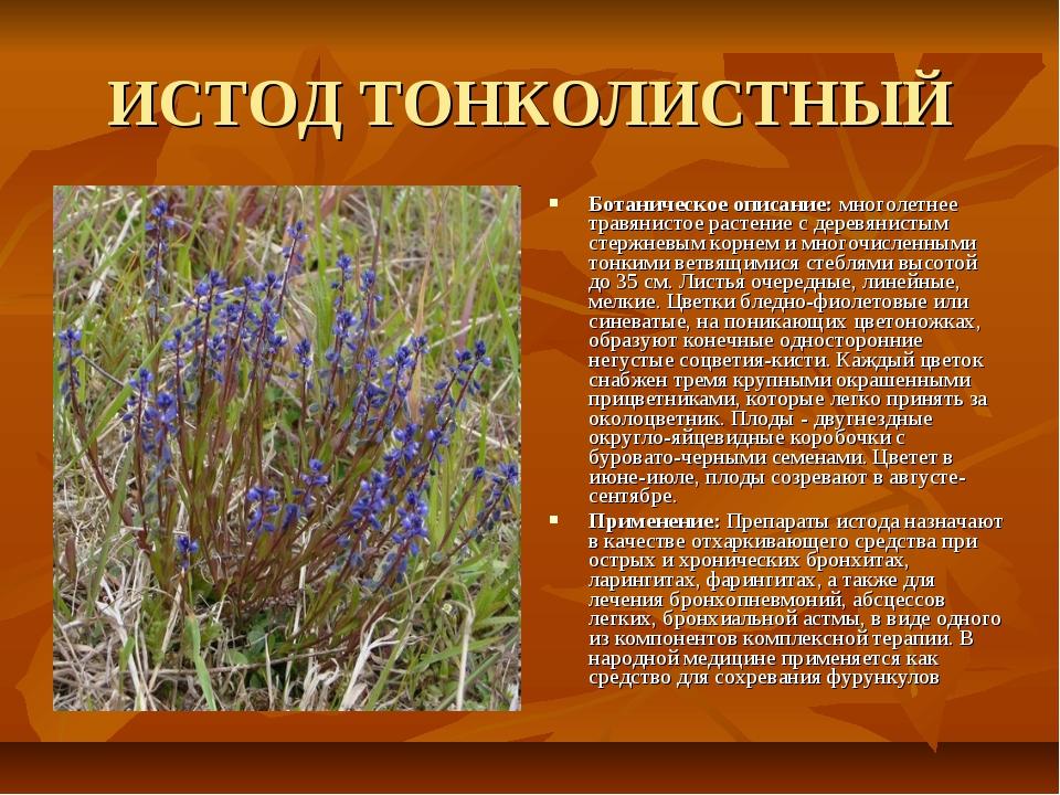 ИСТОД ТОНКОЛИСТНЫЙ Ботаническое описание: многолетнее травянистое растение с...
