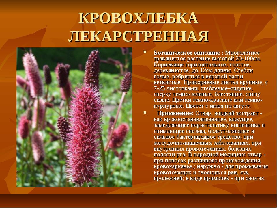 КРОВОХЛЕБКА ЛЕКАРСТРЕННАЯ Ботаническое описание : Многолетнее травянистое рас...