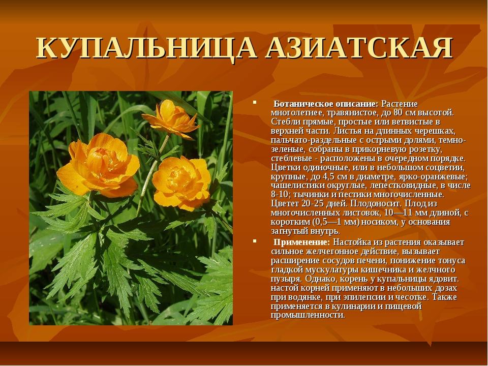 КУПАЛЬНИЦА АЗИАТСКАЯ Ботаническое описание: Растение многолетнее, травянистое...