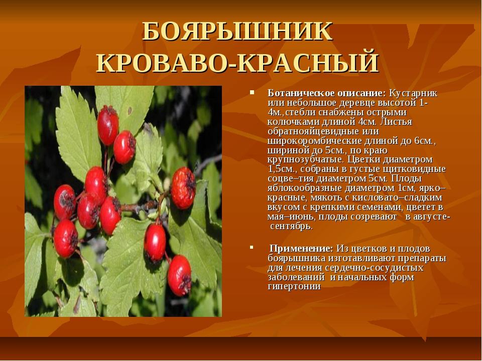 БОЯРЫШНИК КРОВАВО-КРАСНЫЙ Ботаническое описание: Кустарник или небольшое дере...