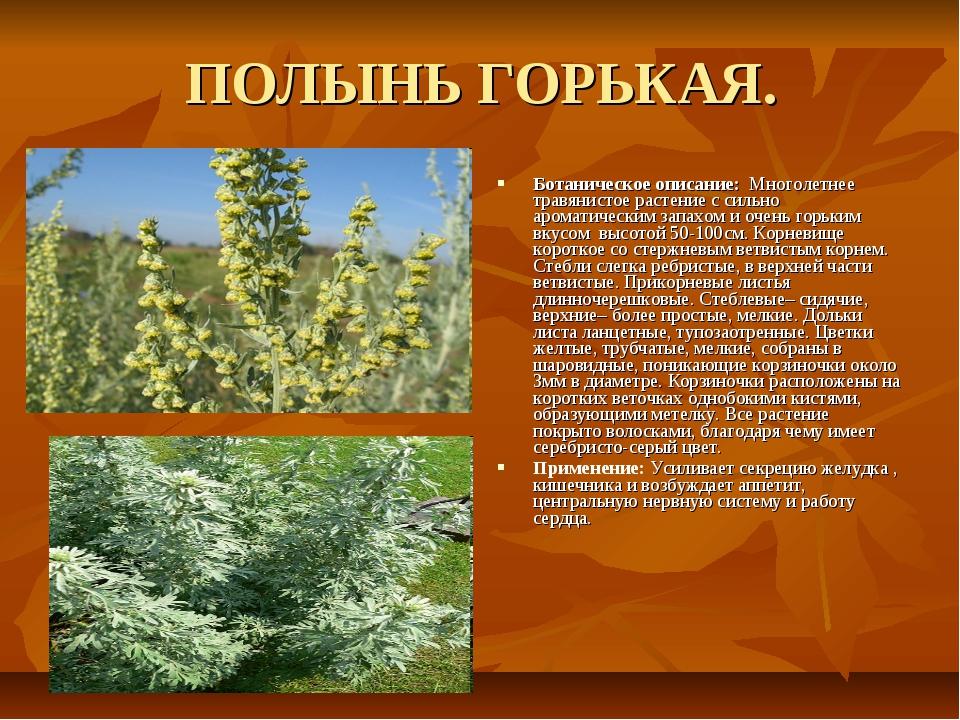ПОЛЫНЬ ГОРЬКАЯ. Ботаническое описание: Многолетнее травянистое растение с сил...