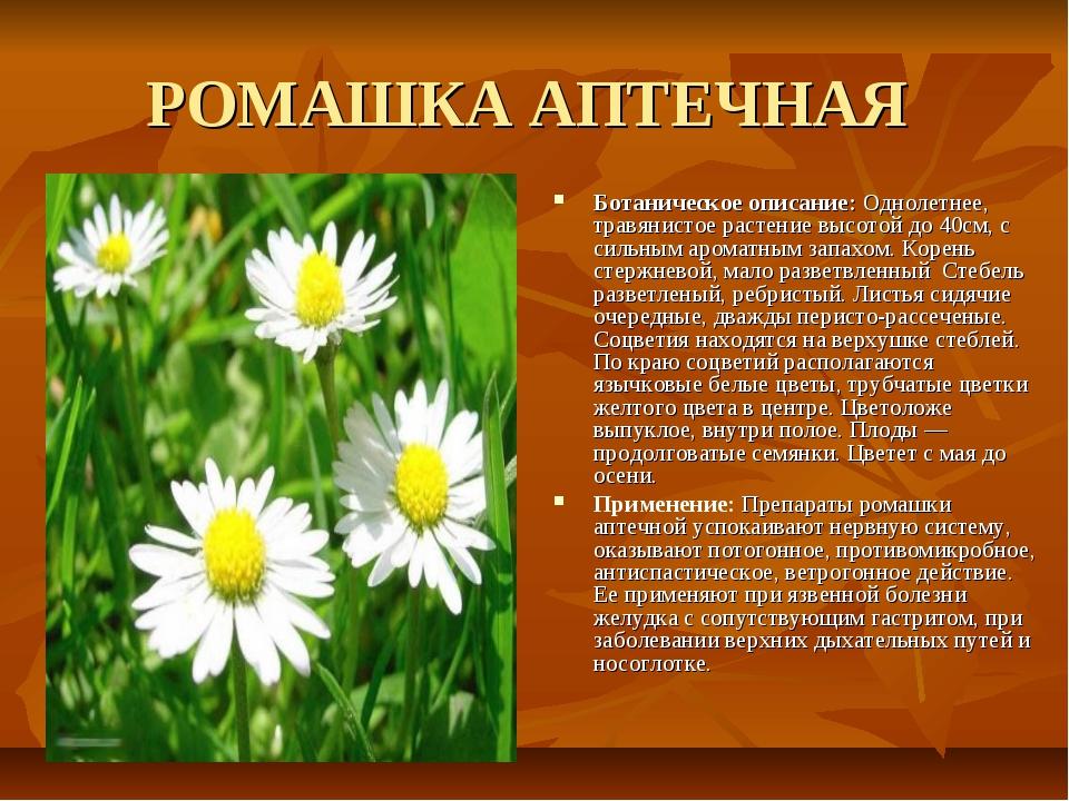 РОМАШКА АПТЕЧНАЯ Ботаническое описание: Однолетнее, травянистое растение высо...