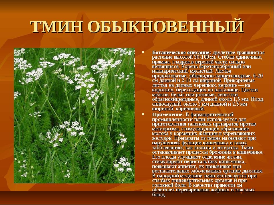 ТМИН ОБЫКНОВЕННЫЙ Ботаническое описание: двулетнее травянистое растение высот...