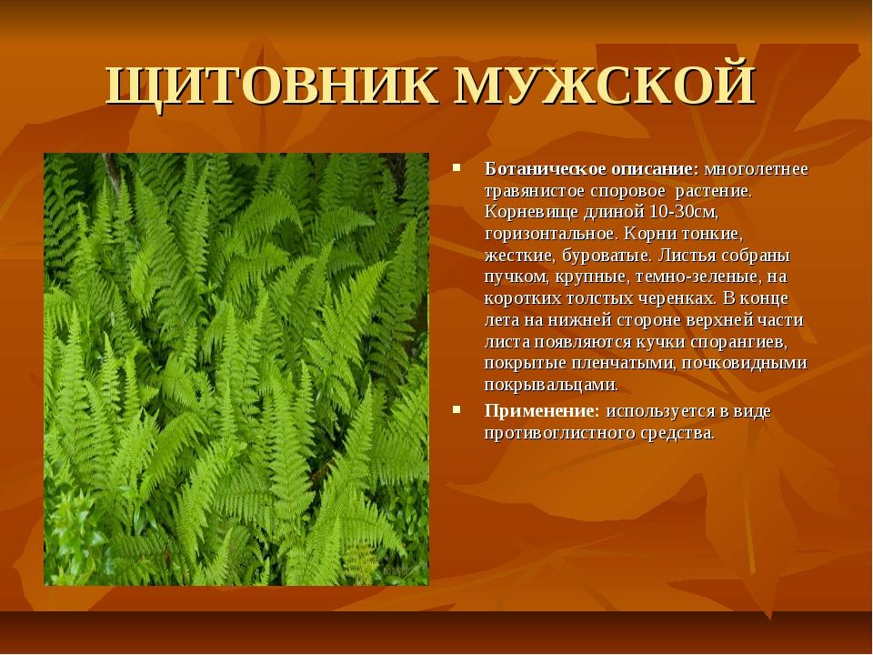 ЩИТОВНИК МУЖСКОЙ Ботаническое описание: многолетнее травянистое споровое раст...