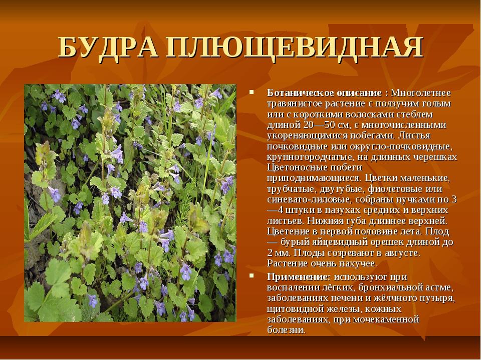 целебные травы россии и их свойства тем как
