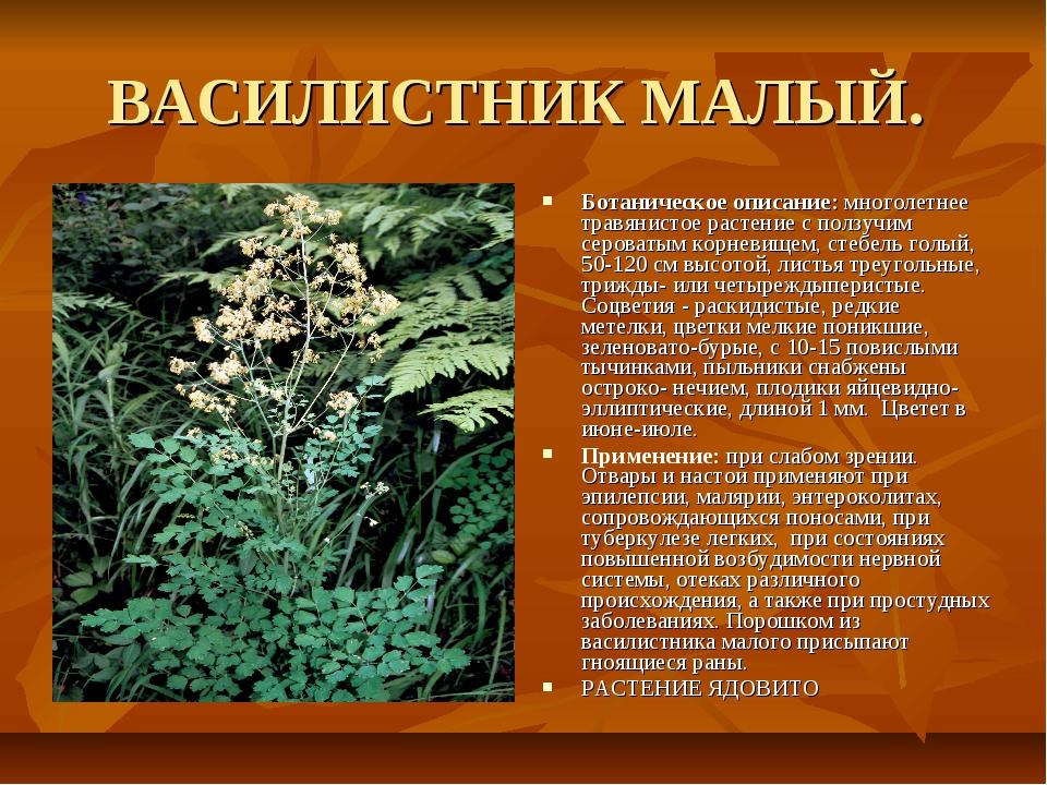 ВАСИЛИСТНИК МАЛЫЙ. Ботаническое описание: многолетнее травянистое растение с...