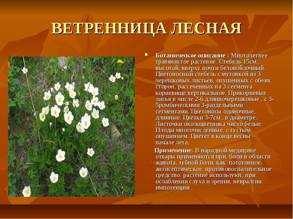 ВЕТРЕННИЦА ЛЕСНАЯ Ботаническое описание : Многолетнее травянистое растение. С...