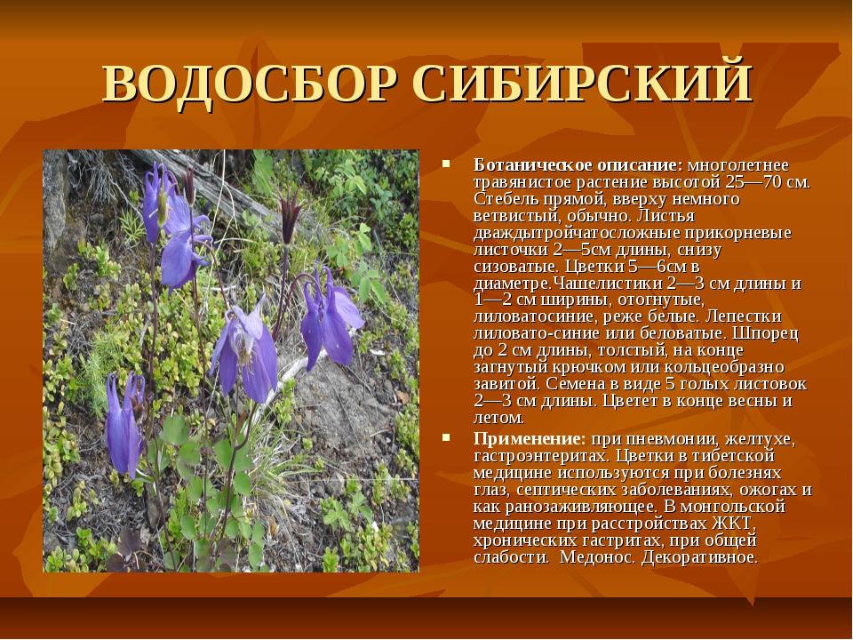 ВОДОСБОР СИБИРСКИЙ Ботаническое описание: многолетнее травянистое растение вы...