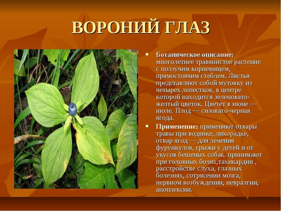 ВОРОНИЙ ГЛАЗ Ботаническое описание: многолетнее травянистое растение с ползуч...