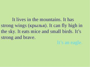 It lives in the mountains. It has strong wings (крылья). It can fly high in