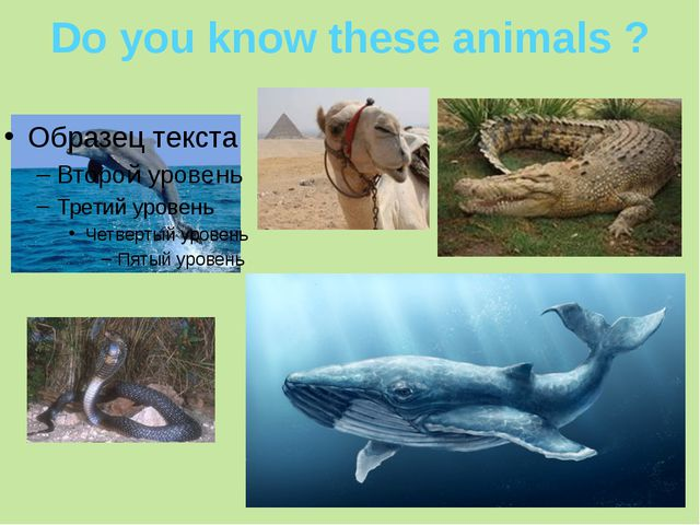 Do you know these animals ?